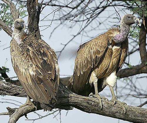 Exotic Expedition in Sasan Gir - Paradise for Bird Watchers
